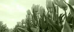 beautiful-bloom-blooming-159406 Kopie_be