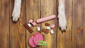 Pets têm diabetes? Saiba tudo sobre