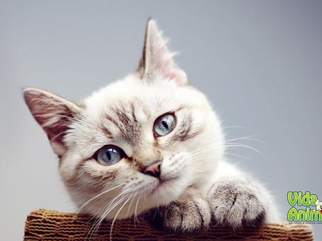 Gatos no cio. E agora?