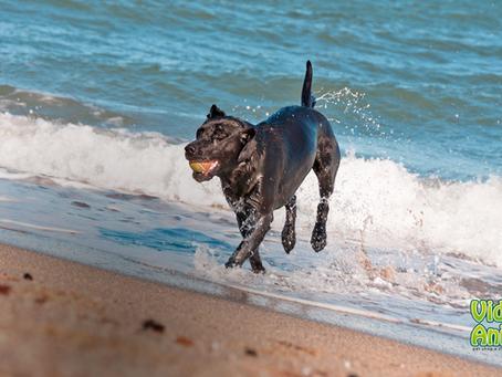 4 cuidados para levar seu cachorro à praia
