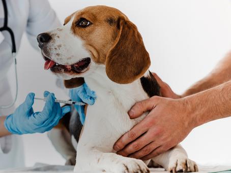 Entenda tudo sobre as vacinas que seu cachorro precisa