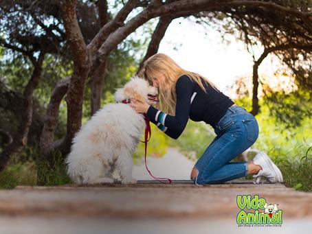 5 passos para ensinar seu cachorro a sentar!