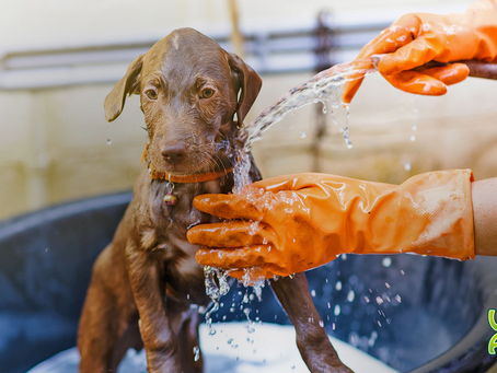 Hora do banho! 4 cuidados essenciais para um momento tranquilo.