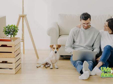 Pets em apartamento, como detectar comportamentos anormais!