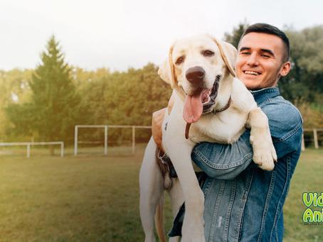 Cuidados para um verão tranquilo com seu pet