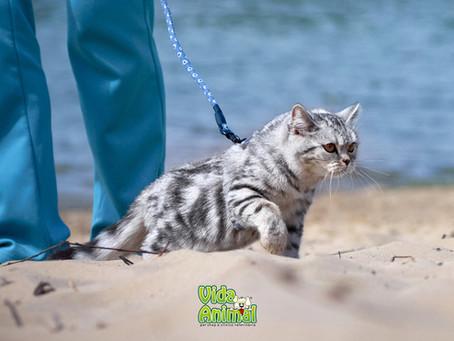 Gatos na praia, quais cuidados ter?