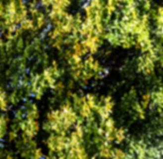 TREE JPEG.jpg