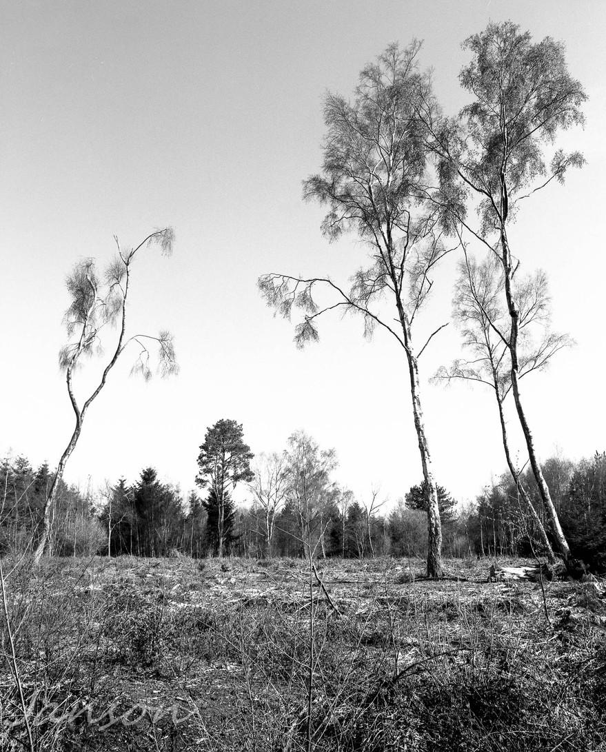 Trees-2001-2.jpg