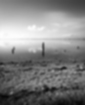 stumps003.jpg