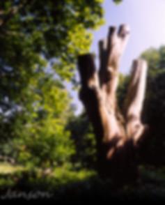 Tree Stump-2.jpg