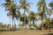 land_for_sale_kola_beach_resort.JPG