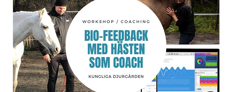 Bio-feedback & hästen som coach