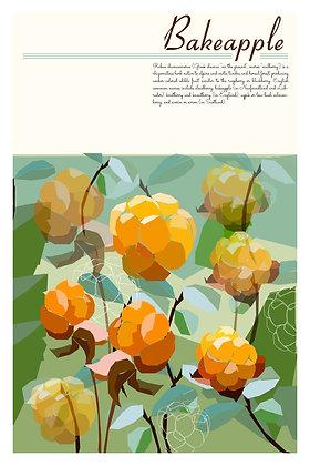 NL Flora - Bakeapples