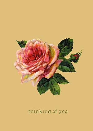 Thinking Of You - Rose