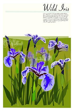 NL Flora - Wild Iris