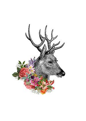 Flora & Fauna - Deer