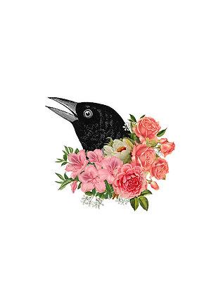 Flora & Fauna - Crow