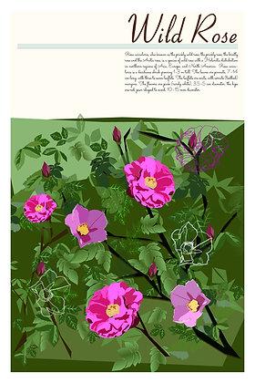 NL Flora - Wild Roses