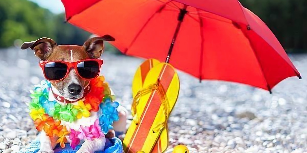 Beach Bound Barky Bingo