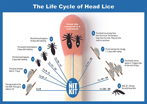 A1 Lice Life Cycle.jpg