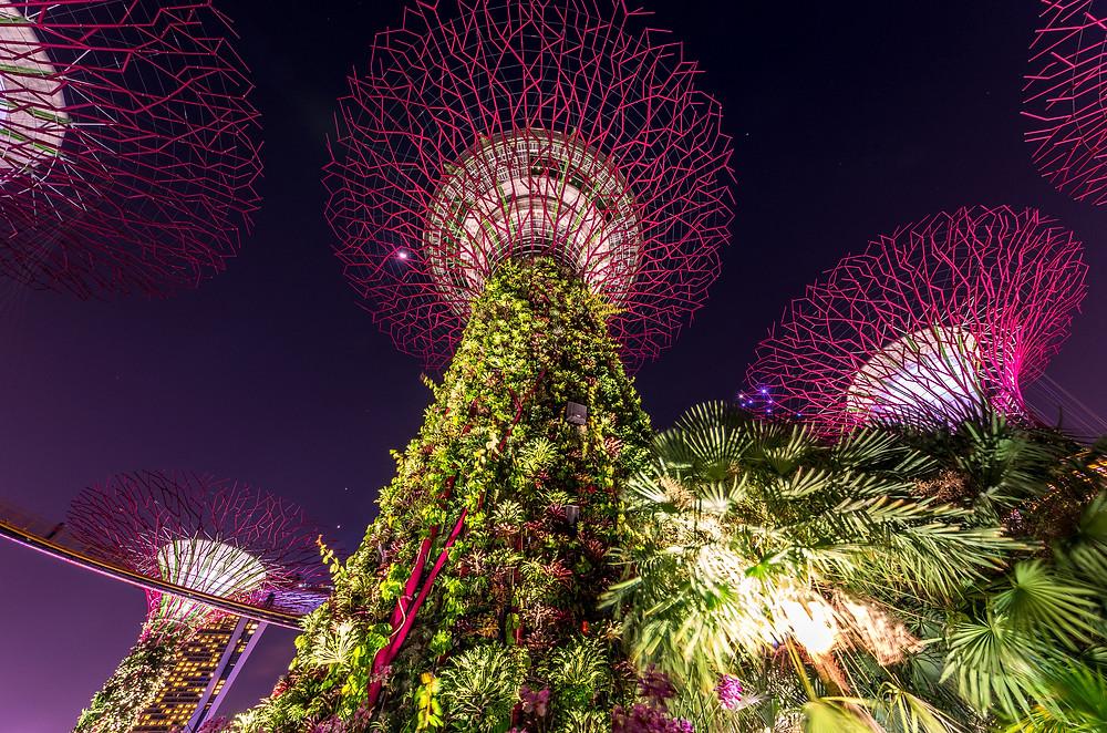 Gardens by the Bay в Сингапуре. Фото Kai Lehmann, Flickr (c)