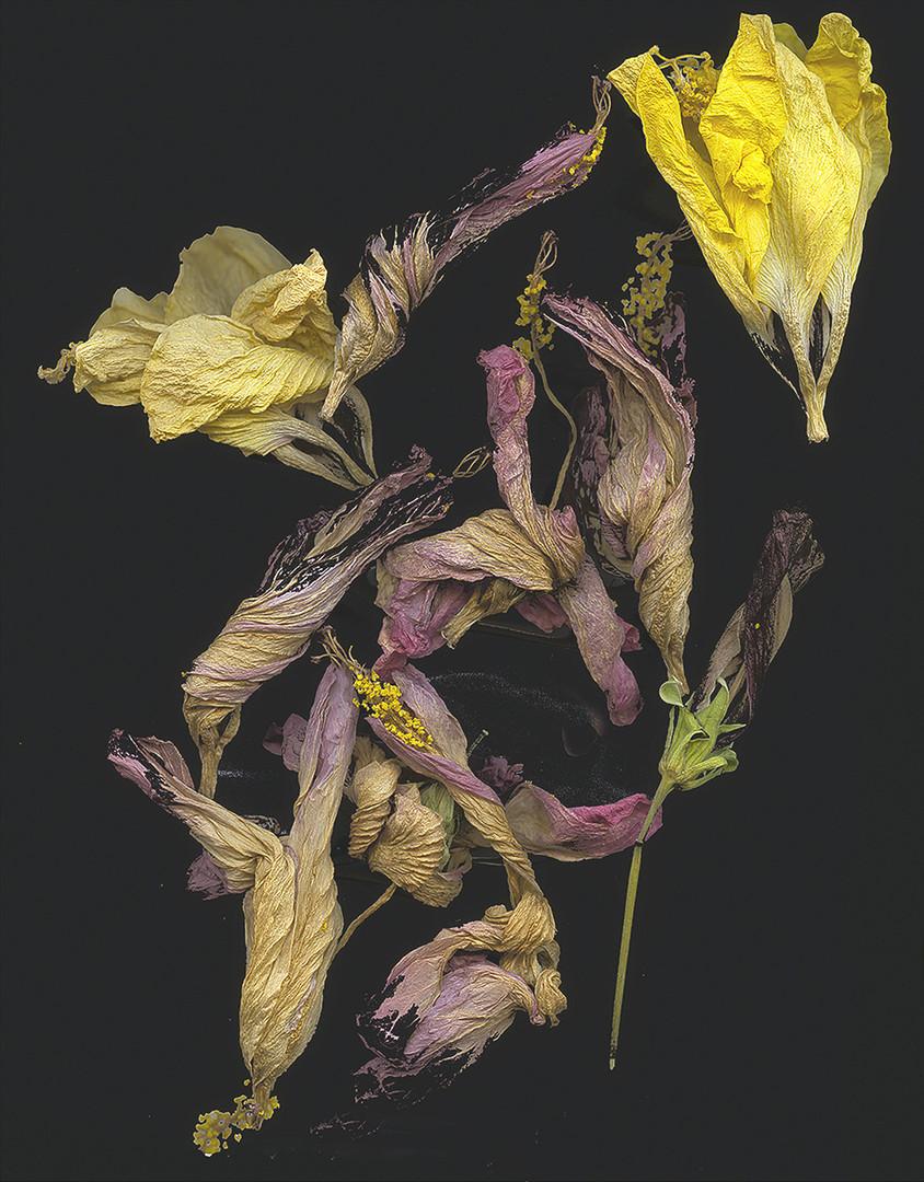 Walter Spagerer, Quotlibet, Pigmentdruck