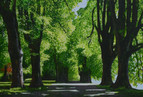 Andreas Scholz, Licht und Schatten im Park