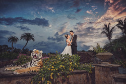 Wedding photo with a tiger