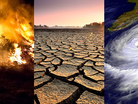 Tale of the Effects of Climate Change
