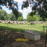 164 - Farm