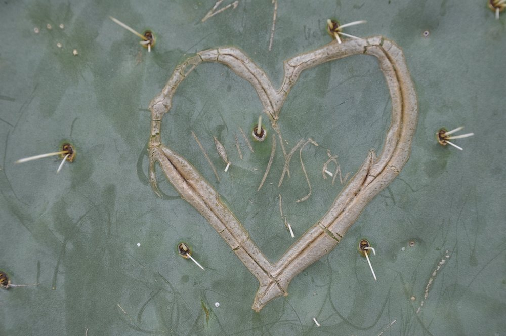Gravure sur cactus