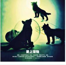 爱上宠物  - 为《品》杂志2016年10月份月刊写的短文