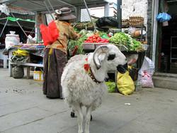 Market, Lhasa, Tibet