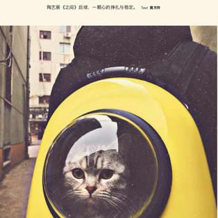 选一只猫 - 为《品》杂志2019年2月份月刊写的短文