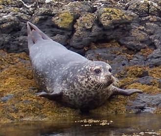 RS-Common-Seal-Profile.jpg