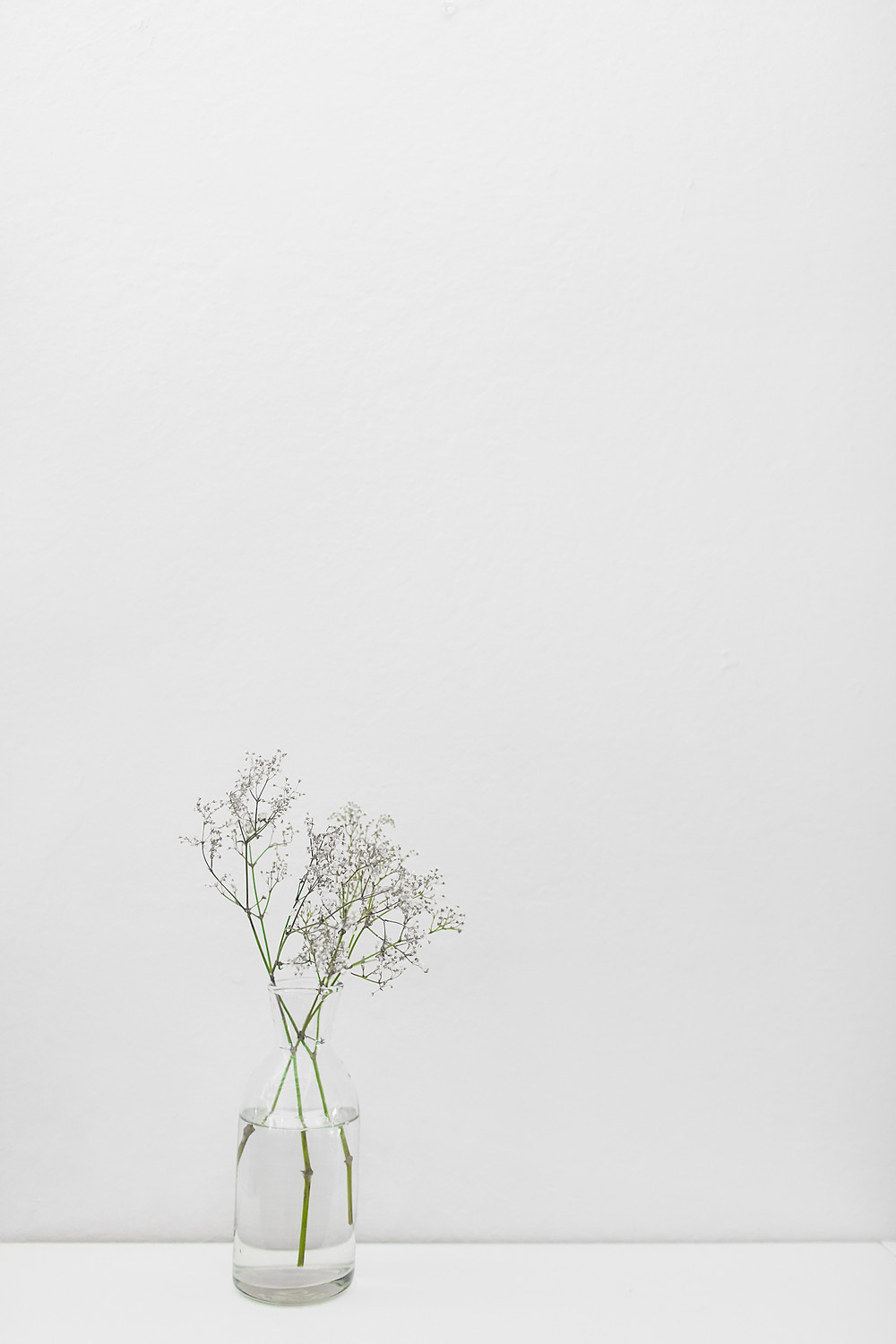 Minimalism, The Minimalist, Minimal, Empty Space, Beauty in Nothingness, Nothing, White Walls, Space, Emptiness, Minimalist Art, Art, Beauty, Plant, Growth, Empty Canvas, Bottle, Plant Pot, Minimalist Plant