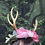 Thumbnail: Antler Crown with Roses