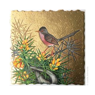Dartford Warbler SOLD