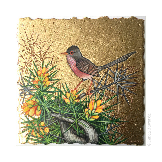 Dartford Warbler SOLD