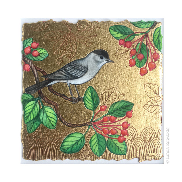 Blackcap SOLD