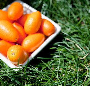 Kumkquats = Delicious