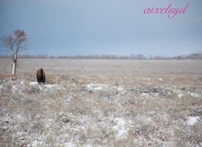 Wonderous Wyoming Wilderness