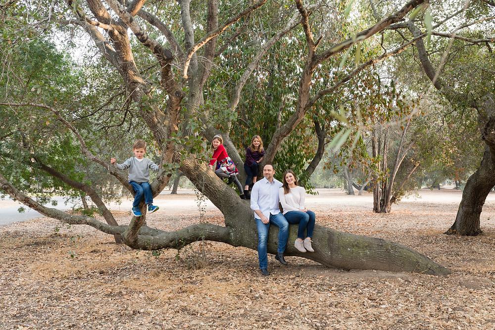 Stanford Cactus Garden trees