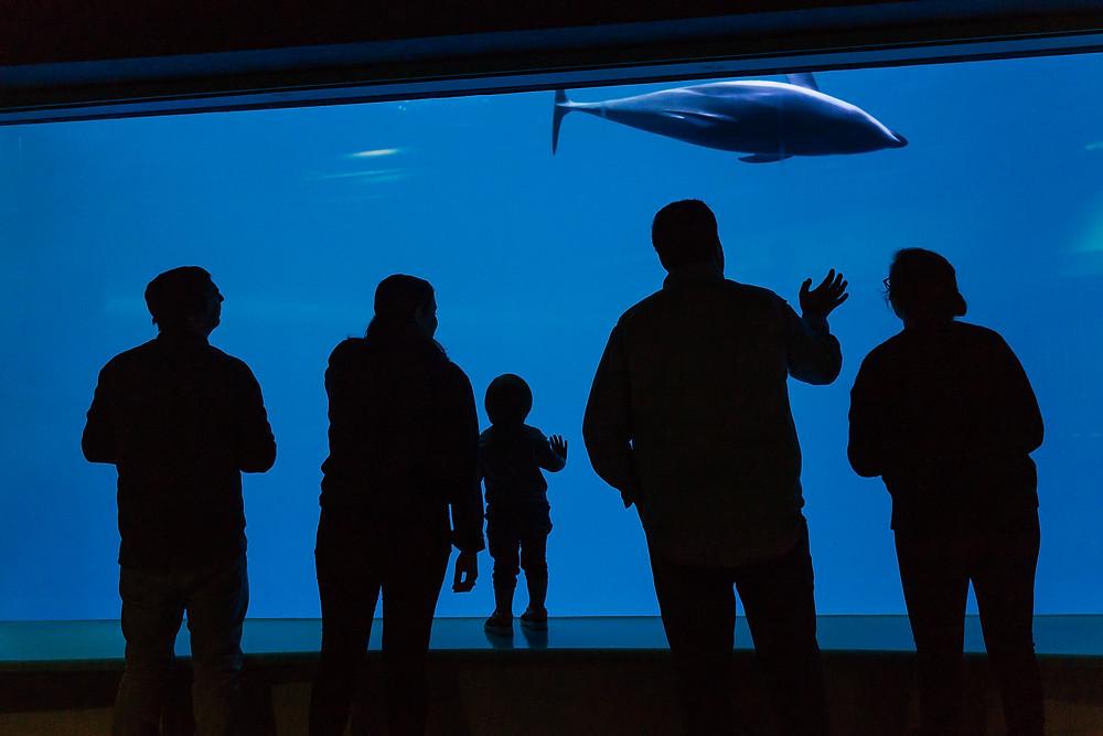 family silhouettes at aquarium