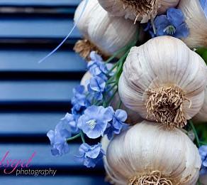 Garlic: the natural anti-biotic