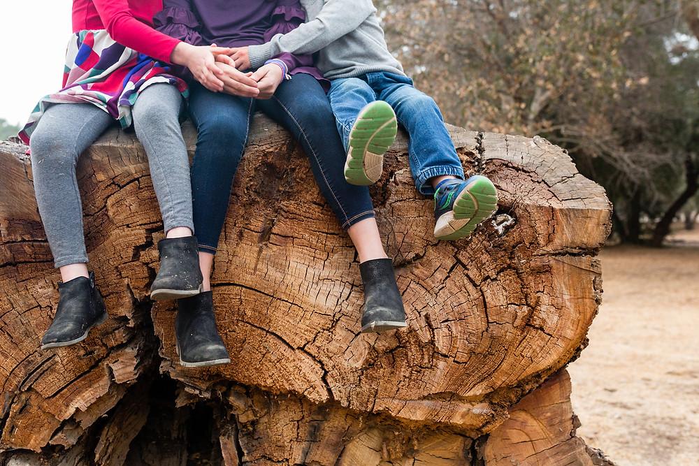 fall family photos, log, Stanford Cactus Garden