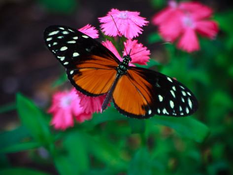 Beauty in Transformation