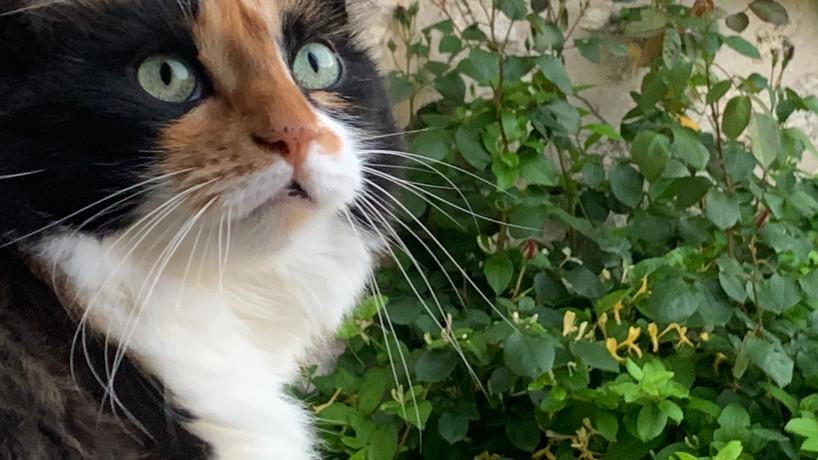 Le chat Sufi