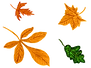 leaves-2121407_640.png