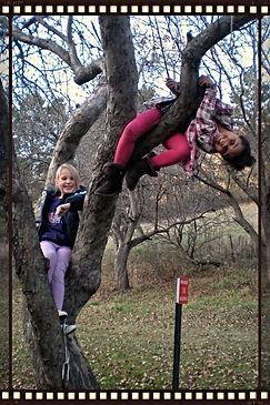 climbtree_edited.jpg